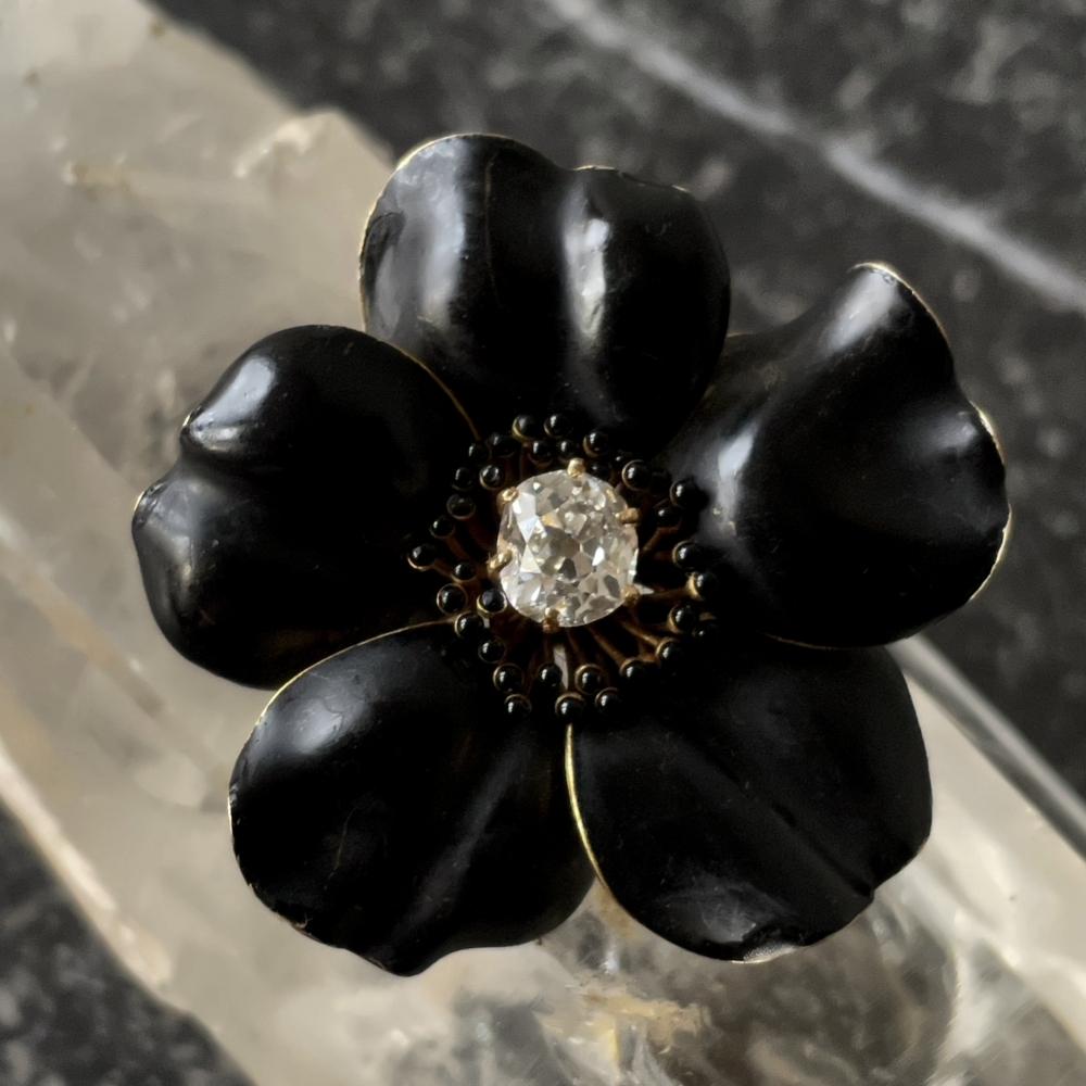 Lenteroos, Helleborus orientalis Black Beauty